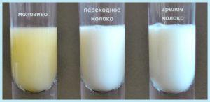 Молозиво и молоко