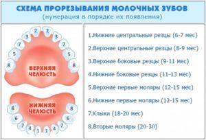 Схема прорезывания молочных зубов у грудничков